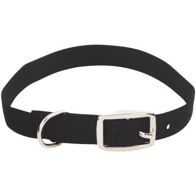 Westminster Pet Ruffin' it Adjustable 20 In. Nylon Dog Collar